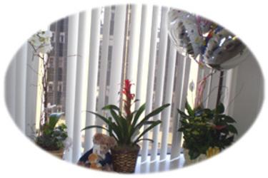 Live_plants8407